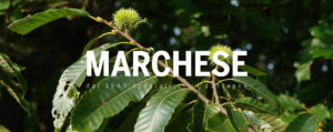 Marchese Castagne