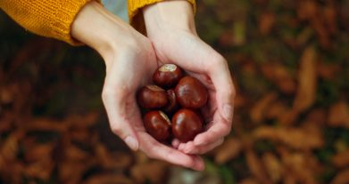 CASTAGNE E MARRONI: CONOSCETE TUTTE LE DIFFERENZE?